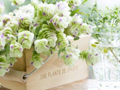 キッチン風水で金運アップする植物たち