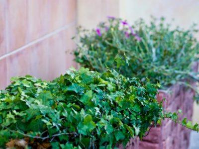 風水的にみる!キッチンにおすすめの観葉植物を育てて運気アップ!