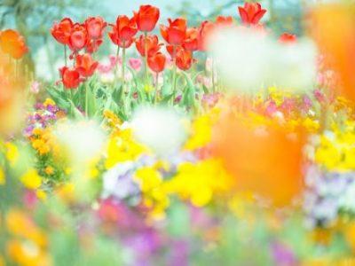 風水で幸せになる!~春ならではの風水術!~
